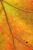 L'autunno colora il particolare del foglio Fotografia Stock