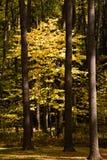 l'autunno colora l'albero Fotografia Stock Libera da Diritti