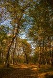 L'autunno colora la foresta fotografia stock
