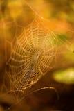 L'autunno colora la ragnatela Immagine Stock