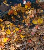 L'autunno colora le foglie e l'acqua Fotografia Stock Libera da Diritti