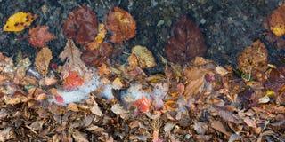 L'autunno colora le foglie e l'acqua Immagini Stock Libere da Diritti