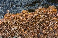 L'autunno colora le foglie e l'acqua Fotografie Stock