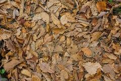 L'autunno colora le foglie su terra Immagine Stock