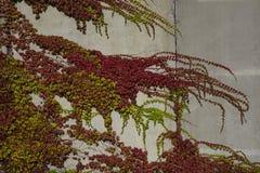 L'autunno colora le foglie su una parete Immagini Stock