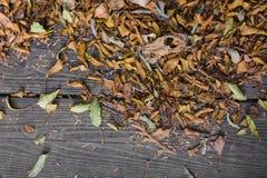 L'autunno colora le foglie sul pavimento di legno Fotografie Stock Libere da Diritti