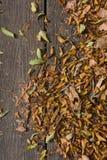 L'autunno colora le foglie sul pavimento di legno Immagine Stock