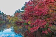 L'autunno colora lo stagno Immagini Stock Libere da Diritti