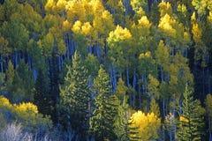 L'autunno colora Santa Fe National Park, nanometro fotografie stock libere da diritti