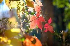 L'autunno comincia, suggerisce in autunno - foglie di autunno fotografie stock libere da diritti