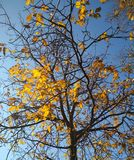 L'autunno dorato è venuto Immagine Stock
