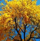 L'autunno dorato è venuto Immagini Stock