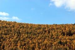 L'autunno dorato Fotografia Stock
