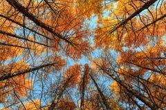 L'autunno dorato Fotografia Stock Libera da Diritti
