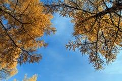 L'autunno dorato Immagine Stock Libera da Diritti