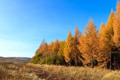L'autunno dorato Immagine Stock