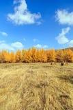 L'autunno dorato Fotografie Stock Libere da Diritti
