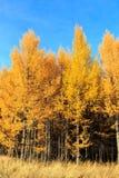 L'autunno dorato Immagini Stock Libere da Diritti