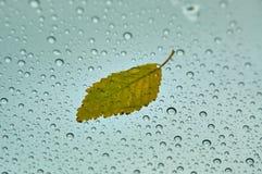 L'autunno, foglia di autunno, autunno è venuto, cadute del fogliame, foglia gialla da un albero immagine stock