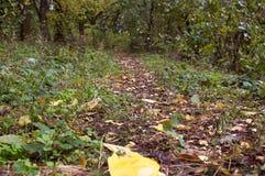 L'autunno, foglia di autunno, autunno è venuto, cadute del fogliame, foglia gialla da un albero fotografie stock libere da diritti