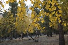 L'autunno in foresta Immagini Stock Libere da Diritti