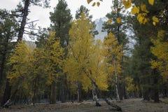 L'autunno in foresta Fotografia Stock