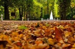 L'autunno giallo e l'arancia lascia sul vicolo e sulla fontana della piramide nel parco più basso di Peterhof, San Pietroburgo, R Immagini Stock Libere da Diritti
