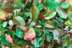 L'autunno ha asciugato le foglie su terra Vista superiore Fotografia Stock Libera da Diritti