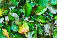 L'autunno ha asciugato le foglie su terra Vista superiore Immagine Stock Libera da Diritti