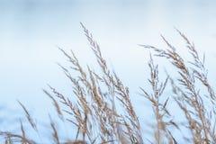 l'autunno ha colorato l'erba sulla riva del lago Fotografia Stock Libera da Diritti