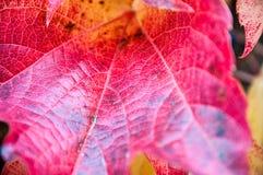 L'autunno ha colorato i fogli Fotografie Stock Libere da Diritti