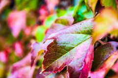 L'autunno ha colorato i fogli Immagini Stock Libere da Diritti