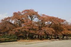 L'autunno ha colorato i fogli Fotografia Stock