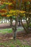 L'autunno ha colorato le foglie su un albero immagine stock libera da diritti