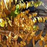 L'autunno ha colorato le foglie un giorno soleggiato immagine stock