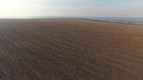 L'autunno ha raccolto il campo con i resti delle spighe del granoturco archivi video