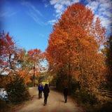 L'autunno Norvegia colora splendido Fotografia Stock Libera da Diritti