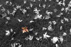 L'autunno scorso colori Fotografia Stock Libera da Diritti