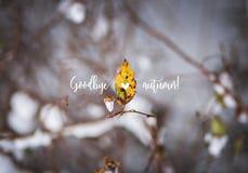 L'autunno scorso foglia, rami nella neve con l'autunno del testo arrivederci Immagini Stock Libere da Diritti