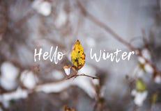 L'autunno scorso foglia, rami nella neve con l'inverno del testo ciao Fotografia Stock