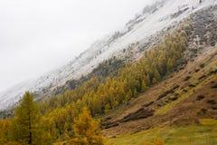 L'autunno si incontra l'inverno Fotografie Stock Libere da Diritti