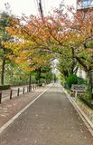 L'autunno sta cominciando fotografia stock