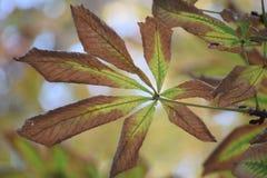 L'autunno sta venendo Fotografie Stock