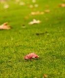L'autunno sta venendo Fotografia Stock