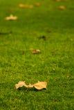 L'autunno sta venendo Fotografie Stock Libere da Diritti