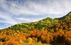 L'autunno tardo Fotografia Stock Libera da Diritti