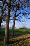 L'autunno tardo alla foresta Immagini Stock Libere da Diritti
