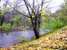 L'autunno tardo nel parco Fotografia Stock
