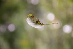 L'autunno verde copre di foglie volo fotografie stock libere da diritti