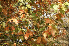 L'autunno viene Immagini Stock